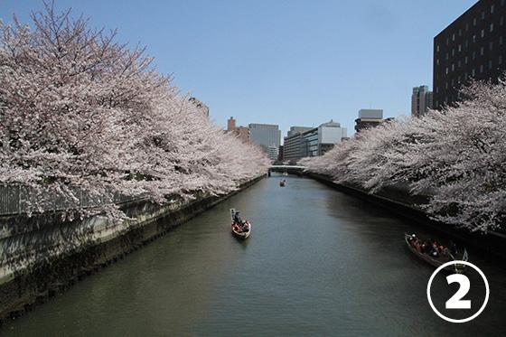 大横川の桜並木2