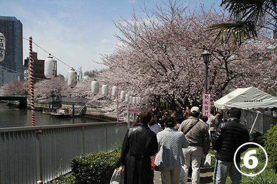 大横川の桜並木6