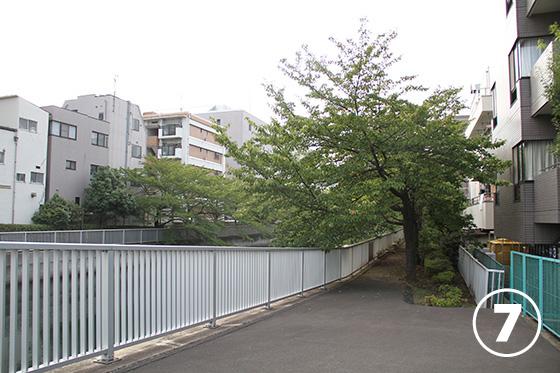 大横川の桜並木7