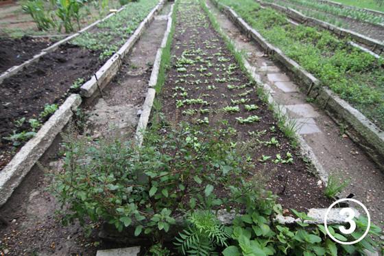 093 ハバナの都市有機農業3