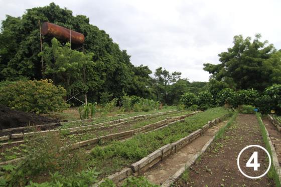 093 ハバナの都市有機農業4