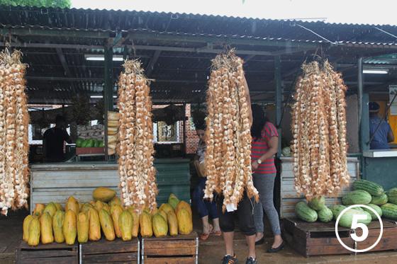093 ハバナの都市有機農業5