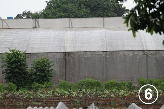 093 ハバナの都市有機農業6