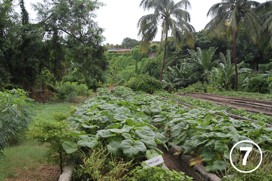 093 ハバナの都市有機農業7
