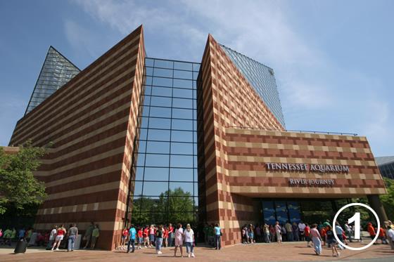 テネシー水族館1