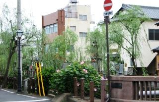 sawara1-photo1.JPG