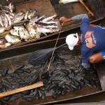 アマゾン川の水上生活 ブラジル マナウス