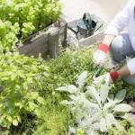 第4章 論文|都市の女性の視点から農業・農村を捉え直す