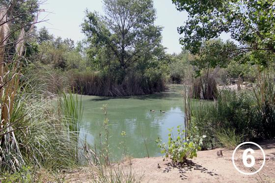 オーガスタス・F・ホーキンス自然公園(Augustus F. Hawkins Natural Park)6