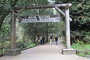 068 ミュア・ウッズ国定公園の保全 (Preservation of Muir Woods National Monument)