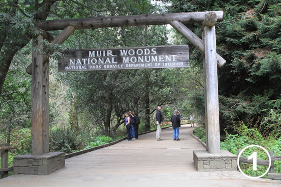 068 ミュア・ウッズ国定公園の保全 (Preservation of Muir Woods National Monument)1