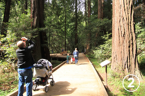 068 ミュア・ウッズ国定公園の保全 (Preservation of Muir Woods National Monument)2