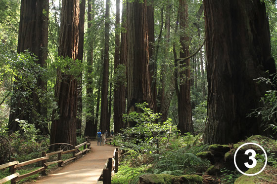 068 ミュア・ウッズ国定公園の保全 (Preservation of Muir Woods National Monument)3