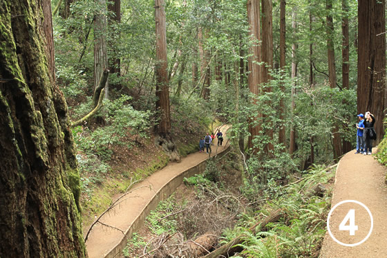 068 ミュア・ウッズ国定公園の保全 (Preservation of Muir Woods National Monument)4