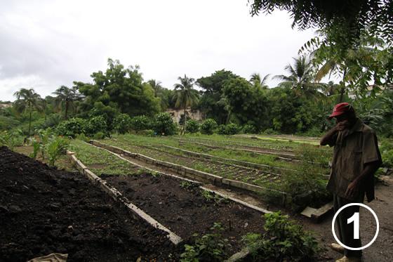 093 ハバナの都市有機農業