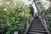 フィルバート通りの階段